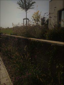 zahrada zuzka 1